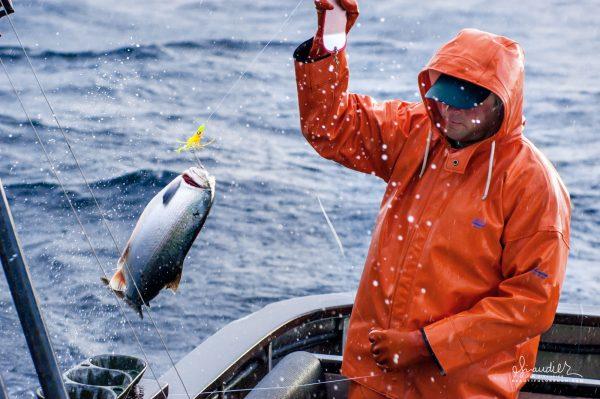 Alaska, coho salmon, commercial fishing, troller