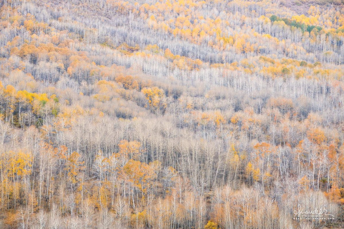 Winter settles into the Aspen Grove at Jackman Park. Steens Mountain, Harney County, Eastern Oregon landscape photography