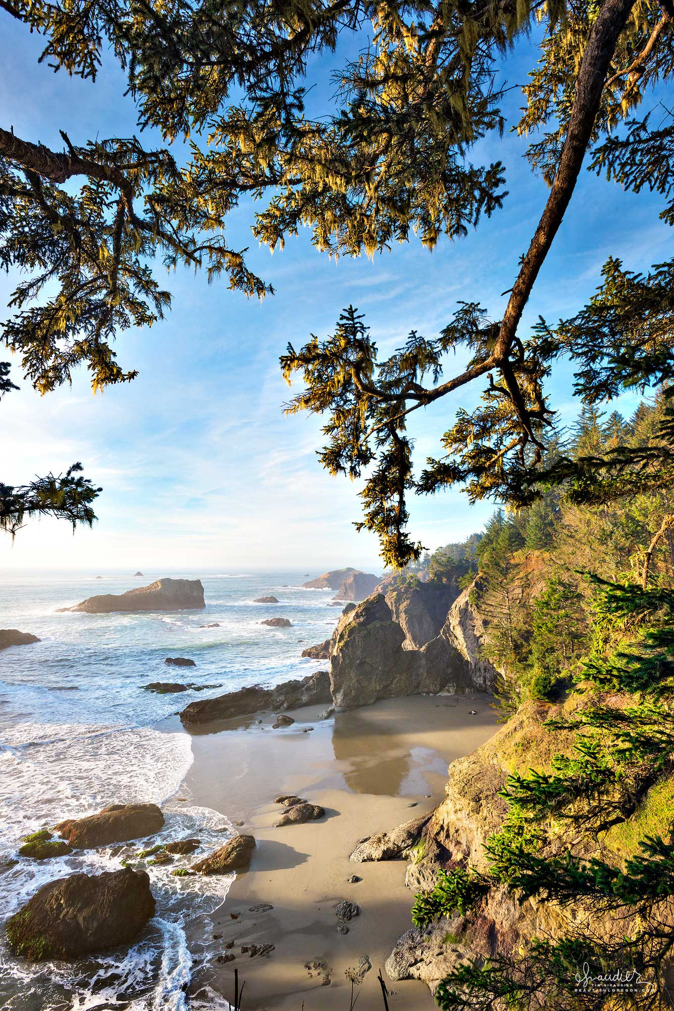 Thunder Rock Point through sitka boughs., Boardman State Park. Curry County, Oregon South Coast.