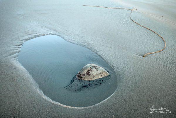 Bull kelp and tidepool, Cape Blanco Oregon South Coast