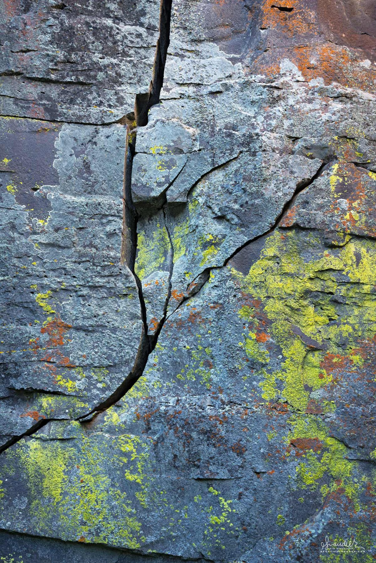Crack in the Ground colorful lichen of Eastern Oregon.