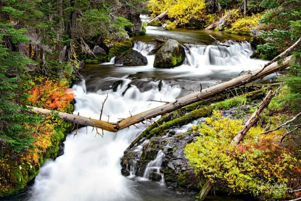 Fall Creek at the height of autumn. Deschutes National Forest, Central Oregon Cascades.