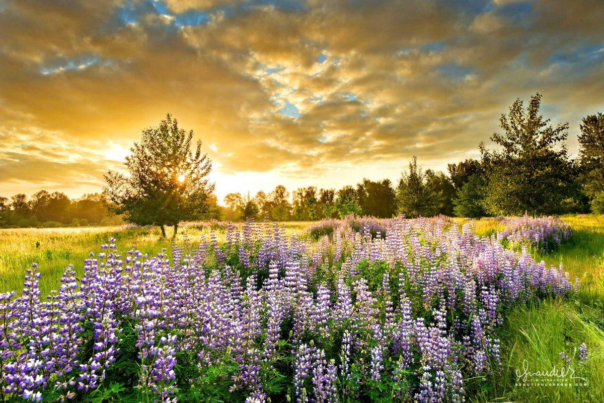 Sunset at Green Island, McKenzie River Trust. Lane County, Willamette Valley, Oregon.