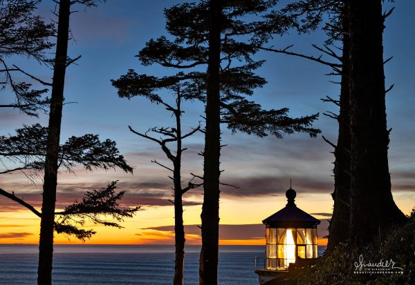Heceta Lighthouse Sunset and Sitka Spruce. Lane County, Oregon Central Coast