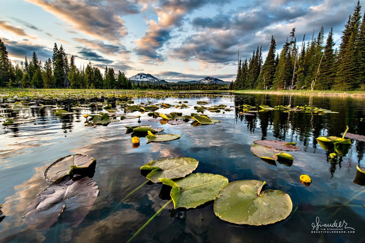 Hosmer Lake lily pads at sunset, with the South Sister and Broken Top in the distance. Paddling the Cascade Lakes Highway. Deschutes National Forest, Central Oregon Cascades landscape photography.