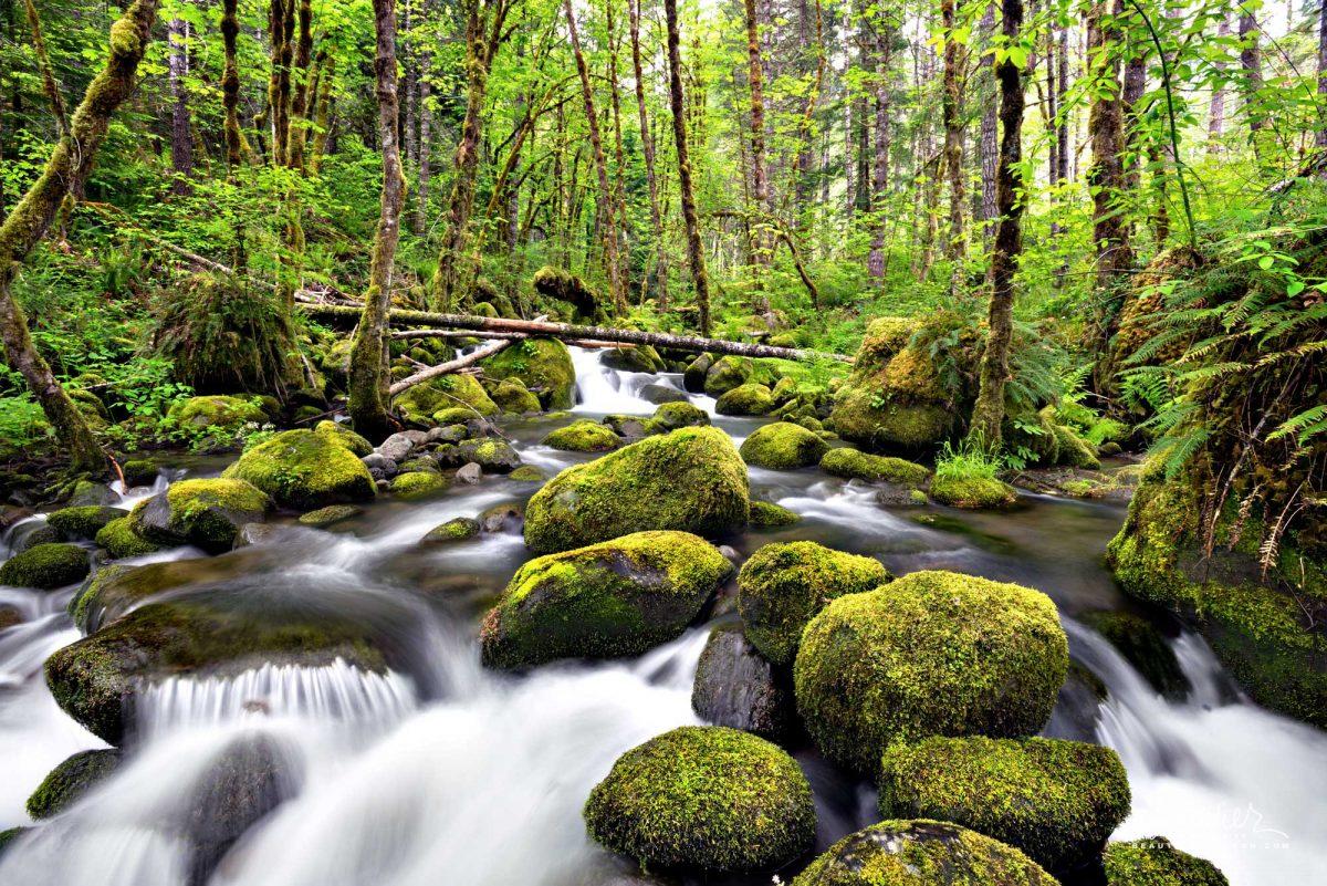 Mossy Creek, Willamette National Forest, Oregon West Cascades