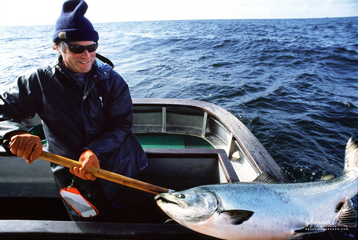 King Salmon Troll Fishing in Gulf of Alaska. A 68 pound Chinook Salmon (Oncorhynchus tshawytscha) caught by hook and line in a well managed commercial fishery off Yakobi Island in Southeast Alaska.