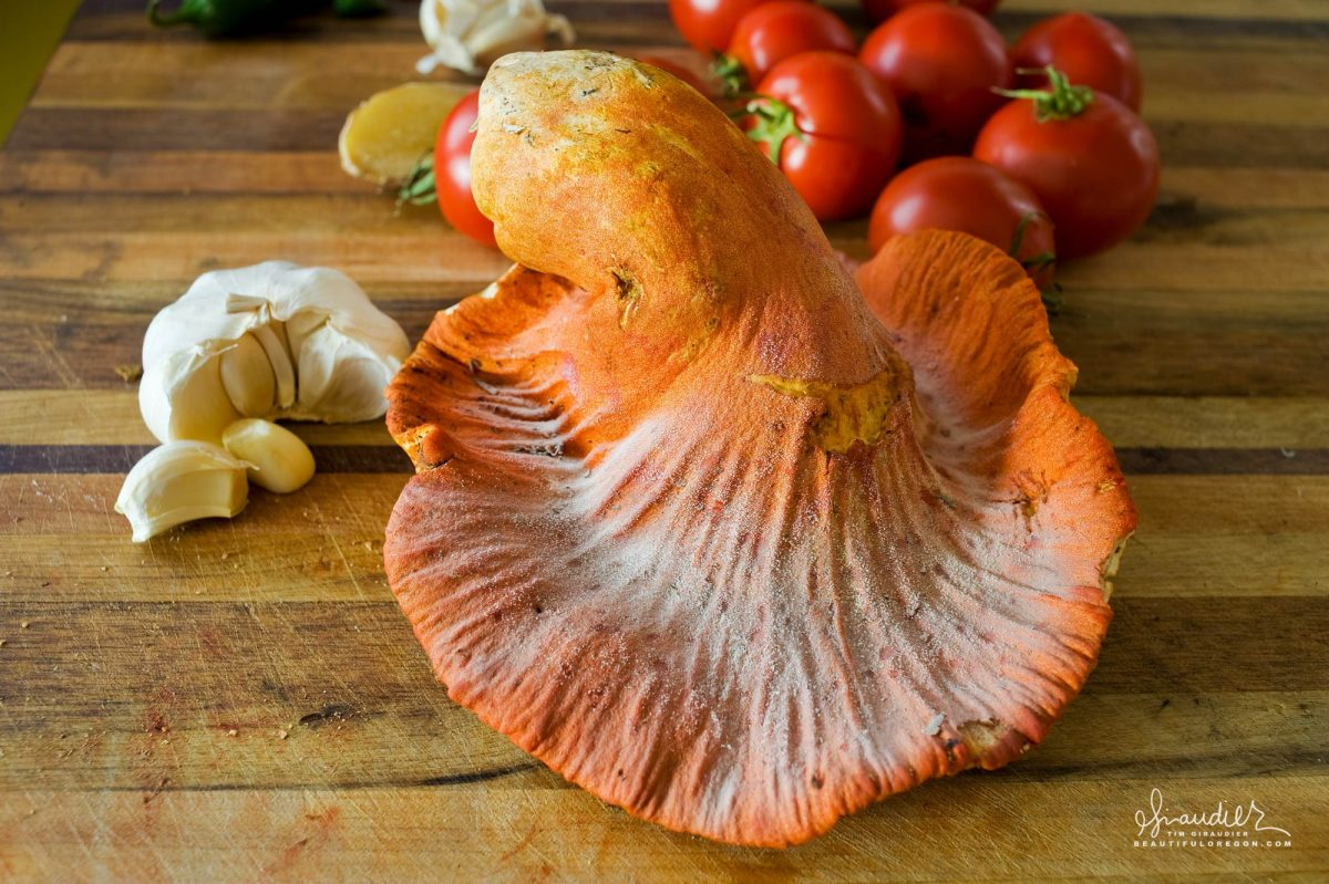 The Lobster mushroom, is the product of a Short-stemmed White Russula (Russula brevipes) being parasitized by a species of mold (Hypomyces Lactifluorum), transforming an otherwise uninteresting mushroom into something delicious.