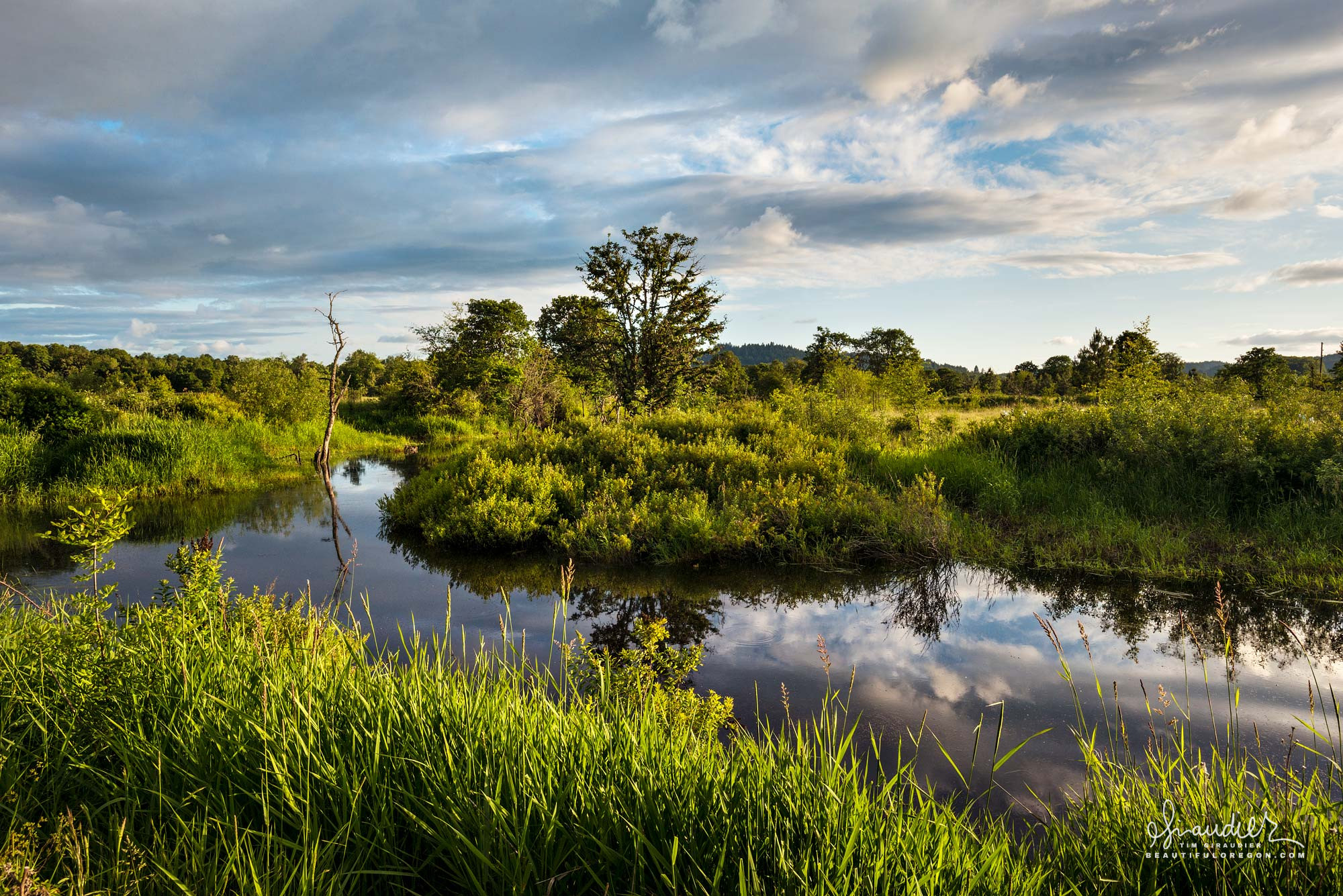 A lush oxbow wetland along the Long Tom River. South Willamette Valley wetland restoration project. Lane County, Oregon landscape photography