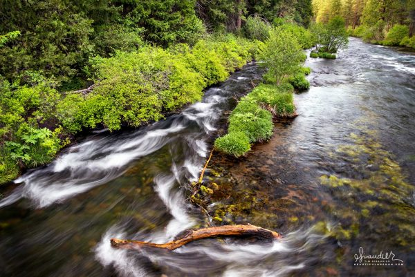 Lush green, its springtime along the Metolius River. Deschutes National Forest, Deschutes County, Central Oregon Cascades.