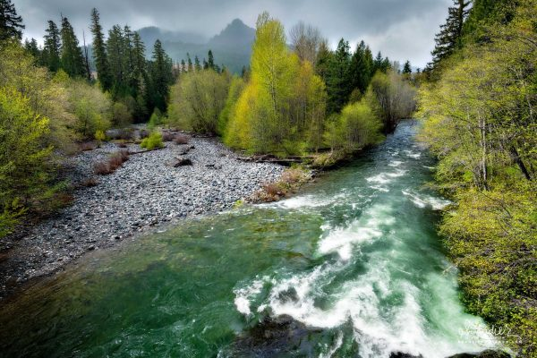 The Middle Fork Willamette River forces a new channel through former riparian forest. Willamette National Forest, Oregon West Cascades.