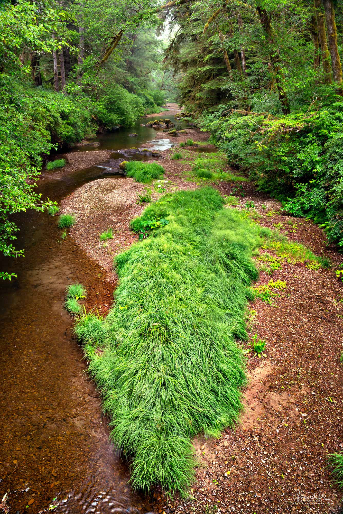 Millicoma River, Elliott State Forest. Coos County, Oregon Coast Range.