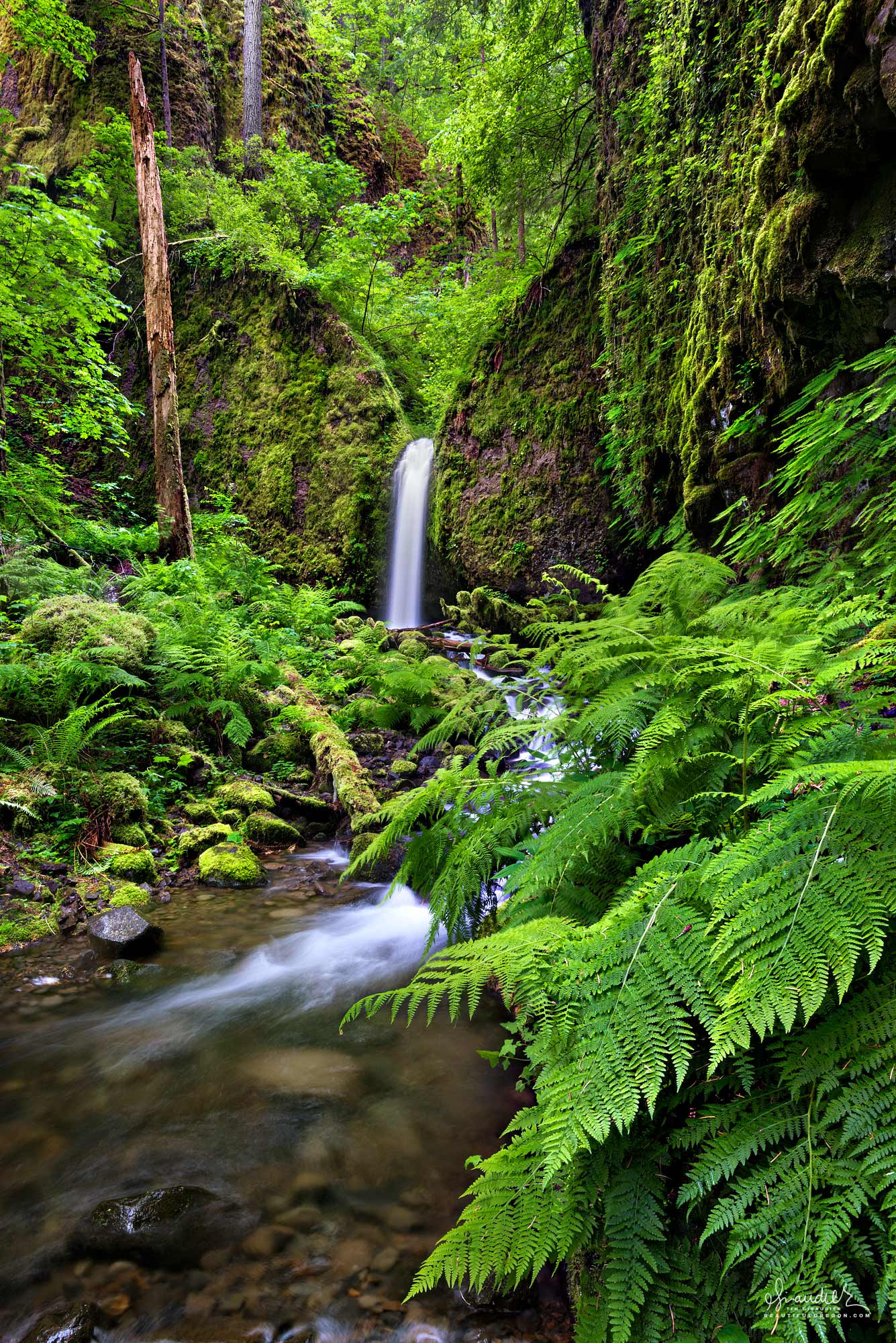 Mossy Grotto Falls along Ruckel Creek, hidden deep within a basalt canyon, this beautiful waterfall is nestled amongst Red Cedar, Doug-fir and Lady Ferns. Mount Hood National Forest, Hood River County, Columbia River Gorge National Scenic Area, Oregon.