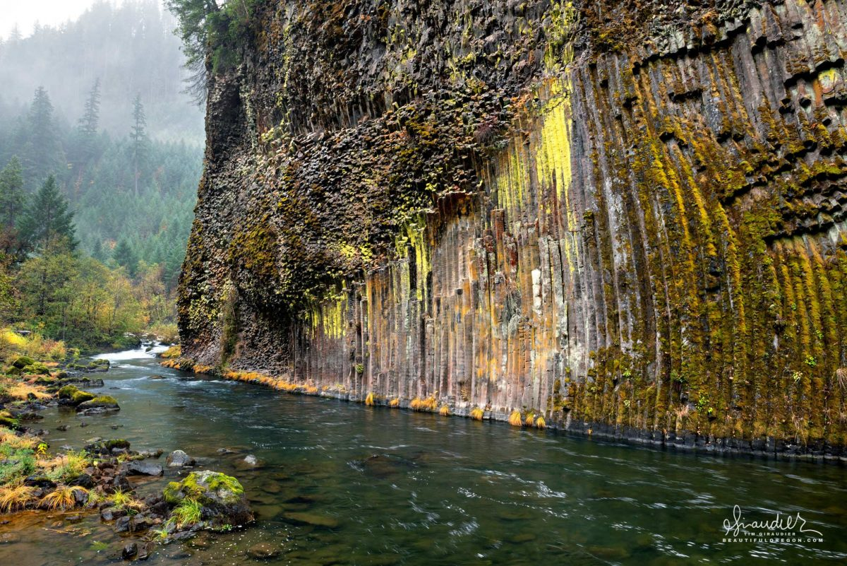 Lichen and moss covered columnar basalt along the North Umpqua River. Umpqua National Forest. Douglas County, Oregon Cascades.