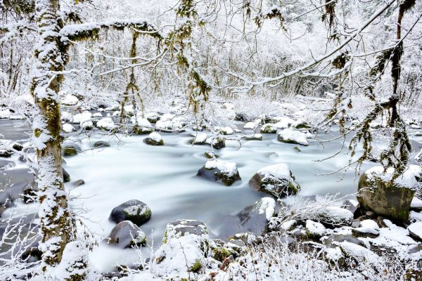 Winter along the North Fork middle Fork Willamette River. Willamette National Forest, Oregon Cascades.