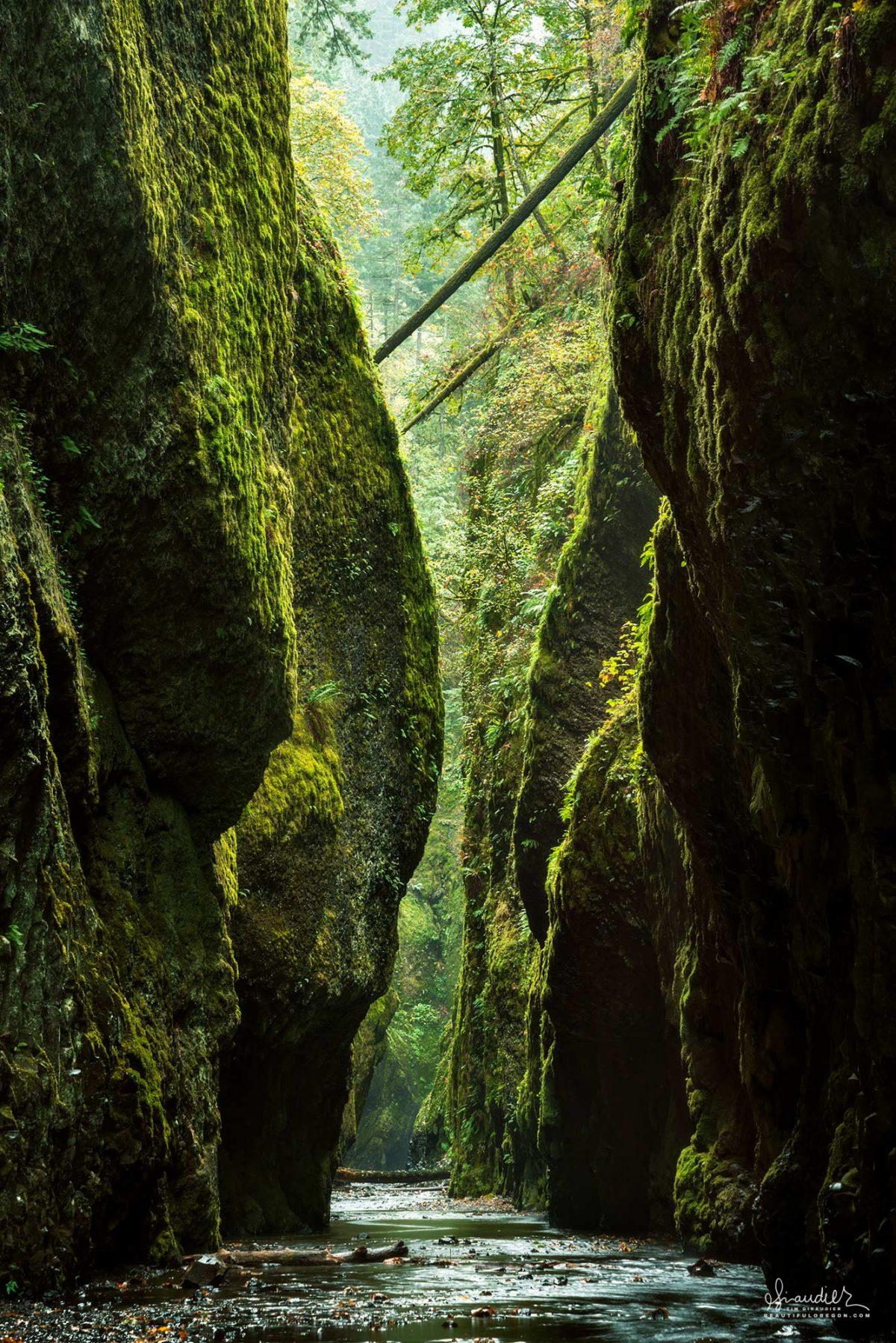 Oneonta Gorge Columbia River Gorge Oregon