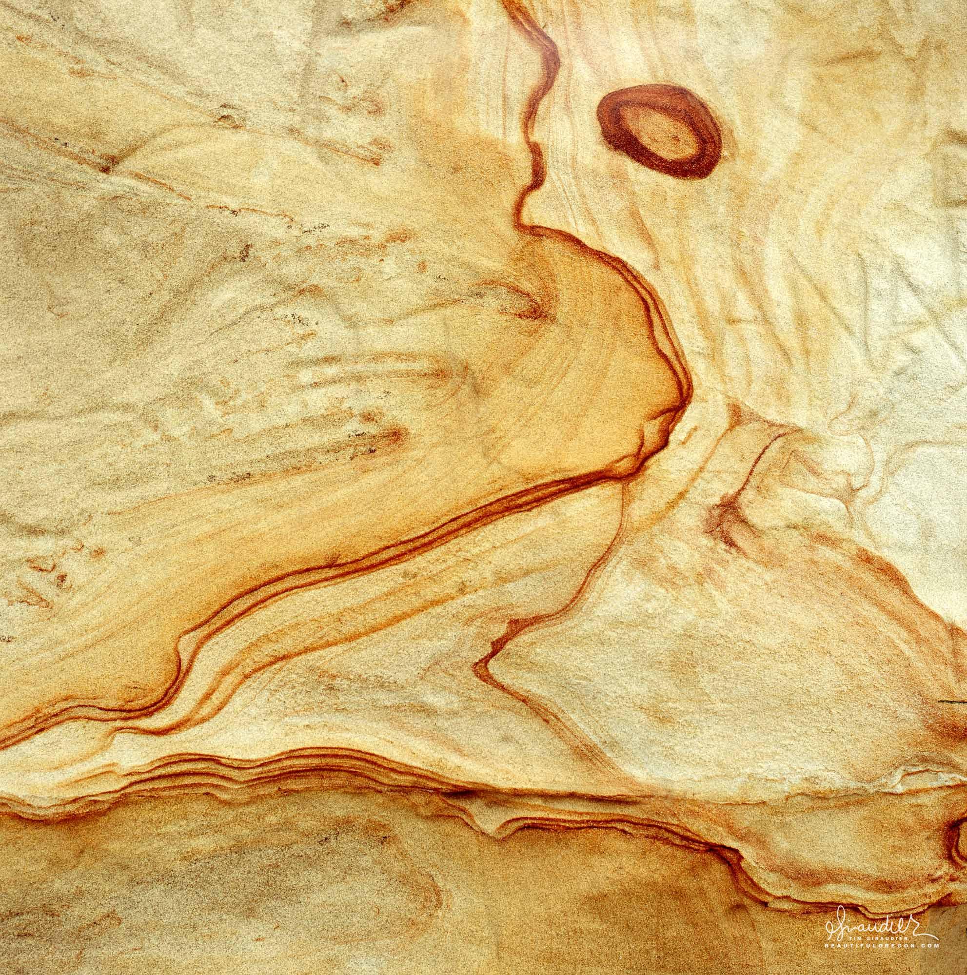 Roosevelt Beach Sandstone and iron oxide bluff along Oregon Coast.