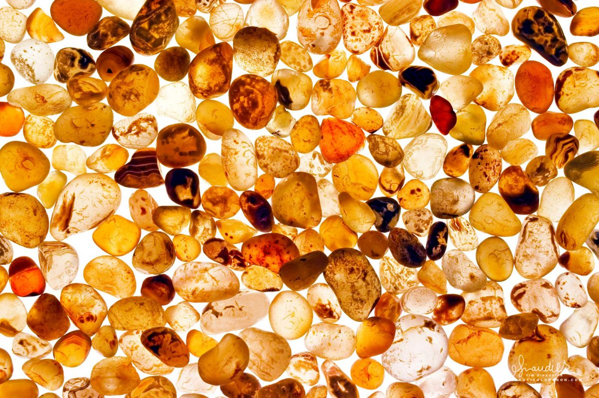Beachcombing for carnelian agates after winter storms is a fun weekend getaway along the Oregon Coast. Yachats, Lincoln County.