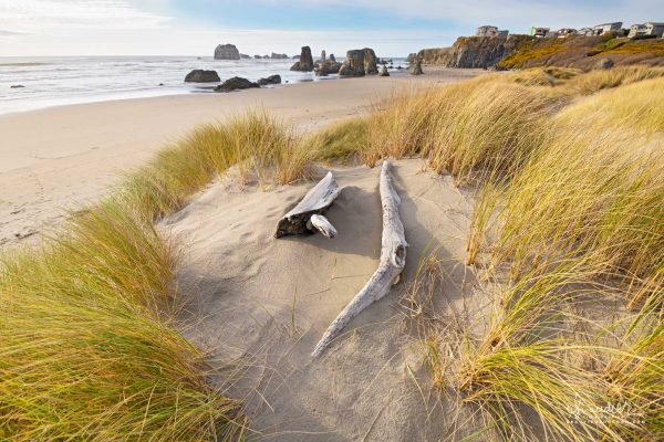 Dune grass and driftwood at Bandon Beach. Coos County, Bandon on Oregon south coast.