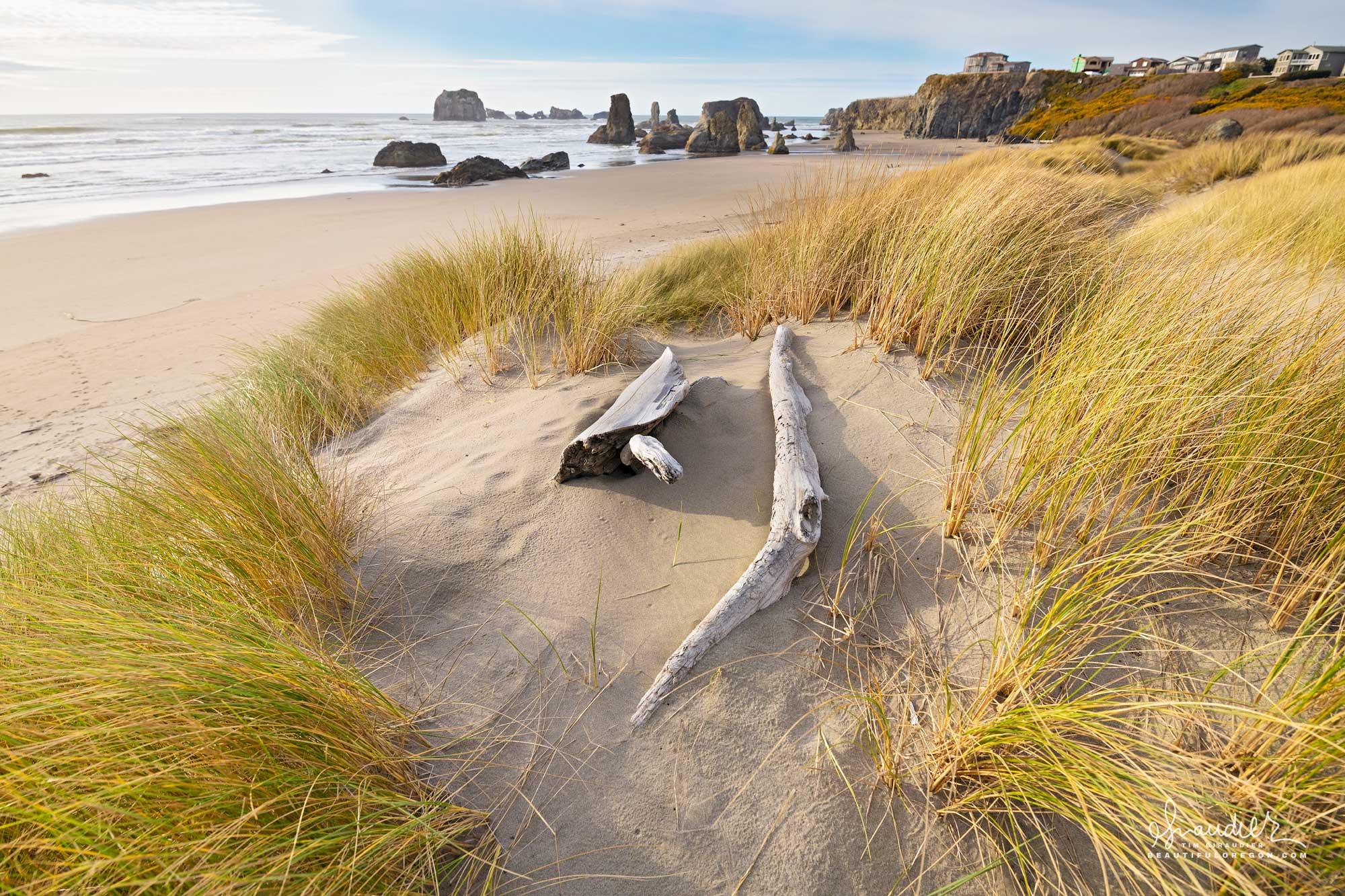 Dune grass and driftwood at Bandon Beach. Coos County, Bandon on Oregon south coast.
