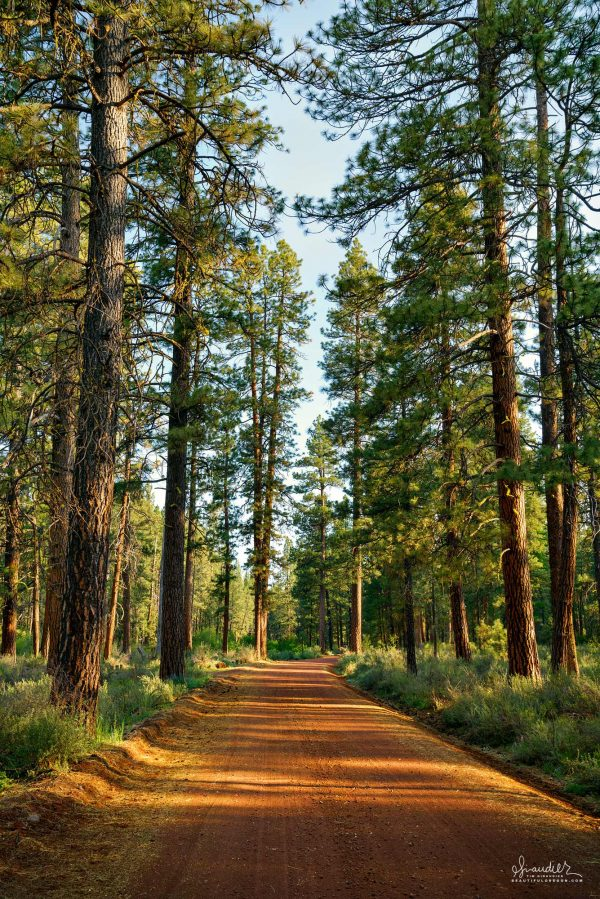 Ponderosa and cinder back roads are a hallmark of Camp Sherman and the Metolius River. Deschutes National Forest, Deschutes County, Central Oregon Cascades.