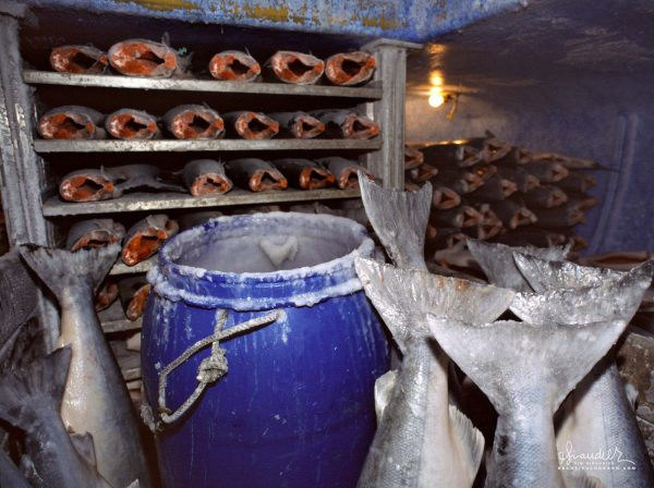 FAS, frozen at sea, King Salmon being glazed in the blast freezer of commercial salmon troller. Gulf of Alaska commercial salmon fishing.