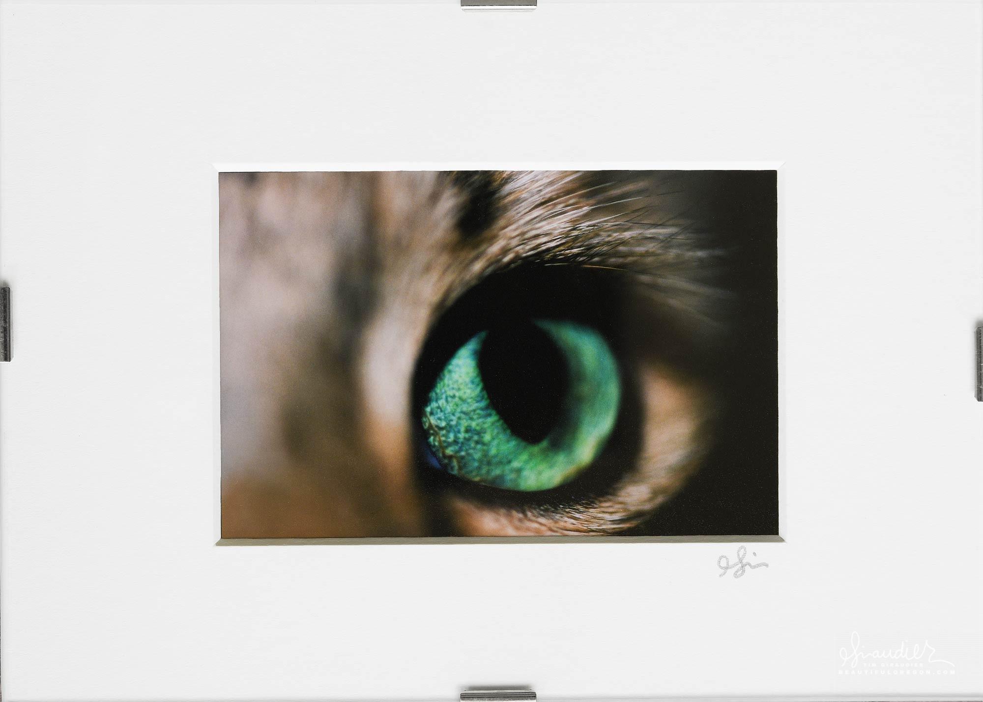 Miko's cat eye