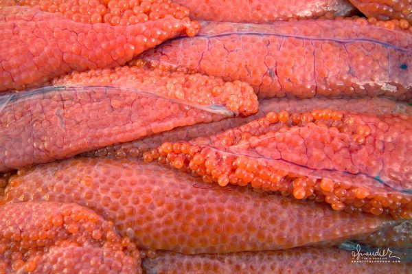 Skeins of Silver Salmon eggs are collected from late season coho in the Gulf of Alaska. High quality salmon eggs will be destined for use in sashimi.