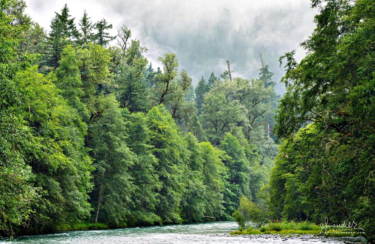 The Middle Fork Willamette River flows west through a riparian forest as it heads towards the Willamette Valley. Willamette National Forest. Lane County, Oregon West Cascades.