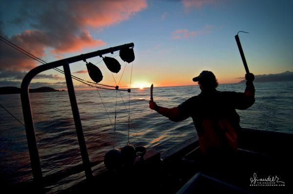 Saying goodnight to a successful day of salmon troll fishing in Cross Sound, Gulf of Alaska.