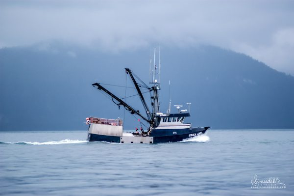 Rigged for long lining, the 49′ Erika Ann heading east along Yakobi Island in the Gulf of Alaska. Commercial fishing from halibut in Alaska.