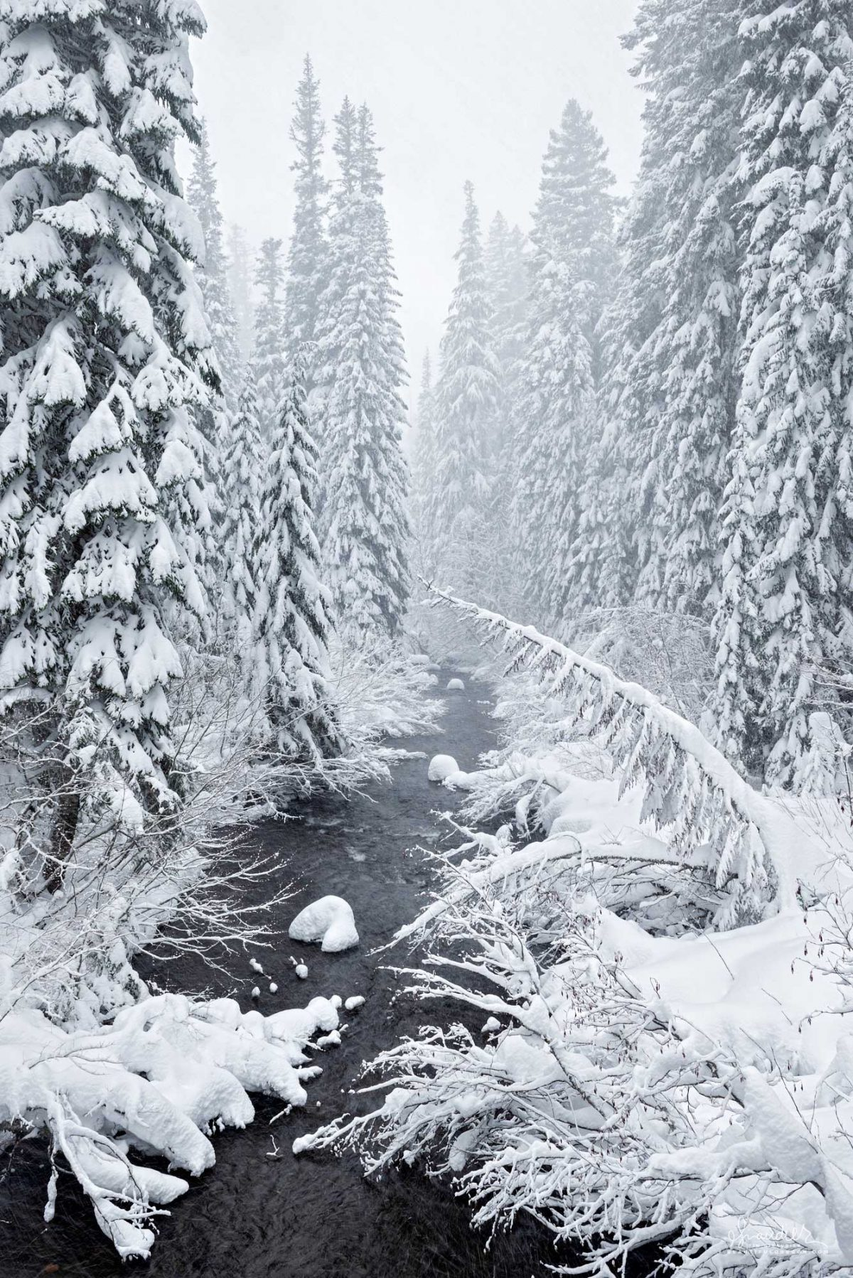 Salt Creek quietly makes its way through a forest of freshly fallen snow. Willamette National Forest, Lane County, Oregon West Cascades.