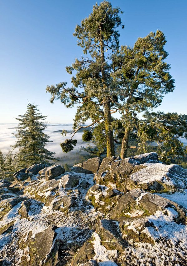 A light dusting of snow collects amongst rock and Incense Cedar at summit of Spencer Butte. Willamette Valley, Eugene Oregon photography.
