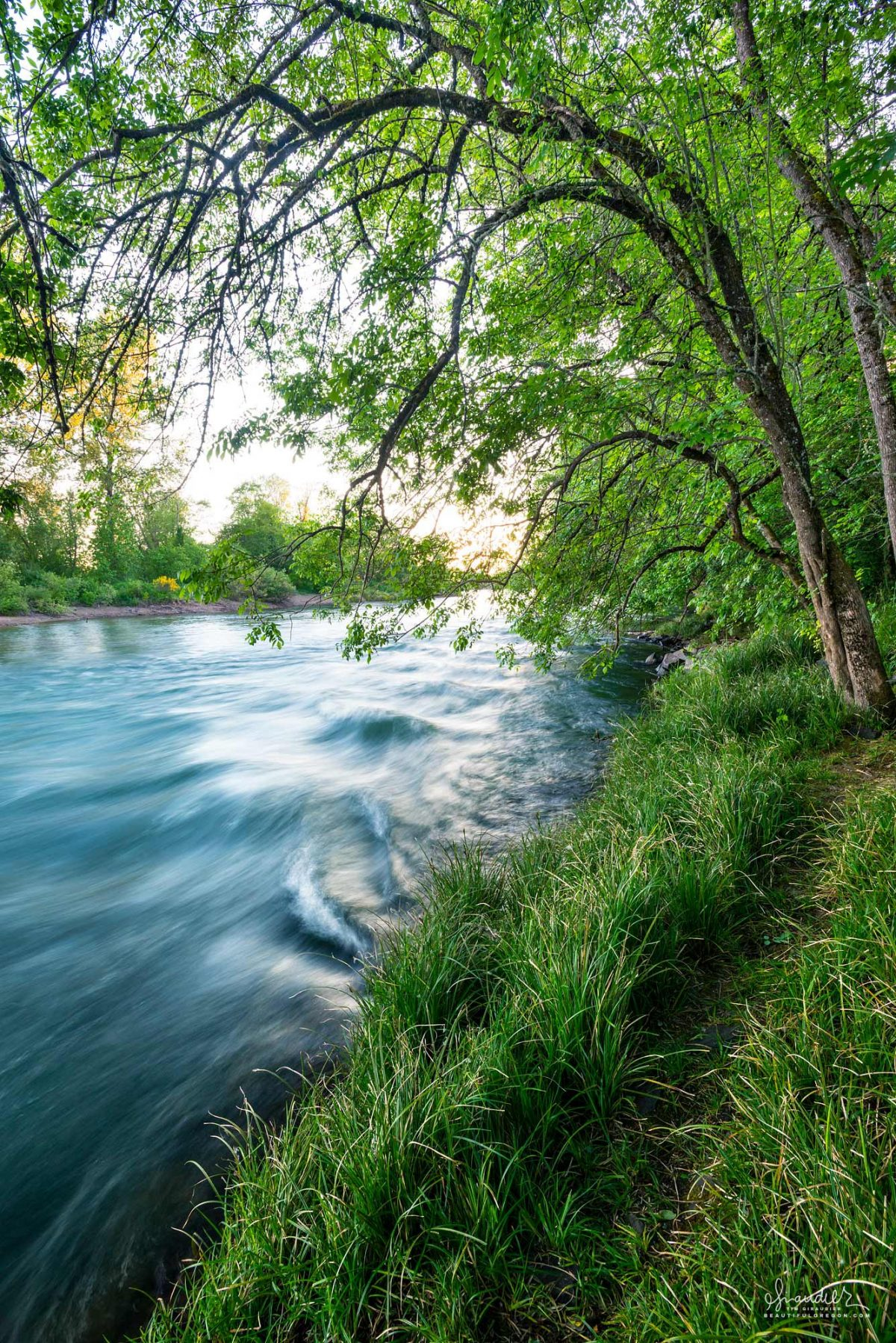 The Willamette River flows through Alton Baker Park and the town of Eugene Oregon. Lane County, south Willamette Valley landscape photography.