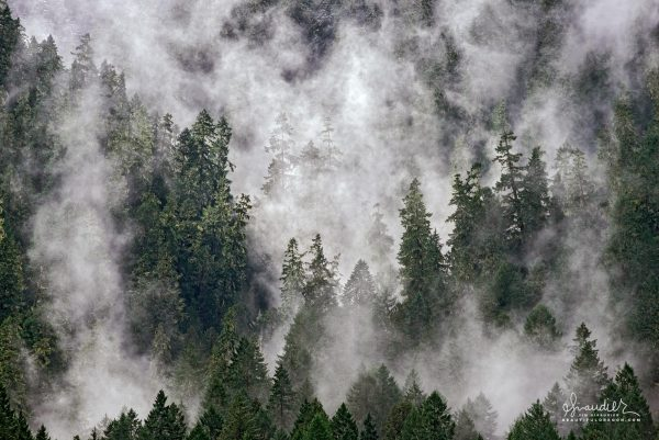 Mist rises from an old-growth Doug-fir forest on north face of Larison Rock. Oakridge, Oregon. Willamette National Forest, Oregon Cascades.