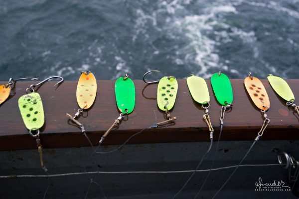 Trolling spoons set up for Silver Salmon are ready to fish. Southeast Alaska sustainable hook and line salmon troll fishery.