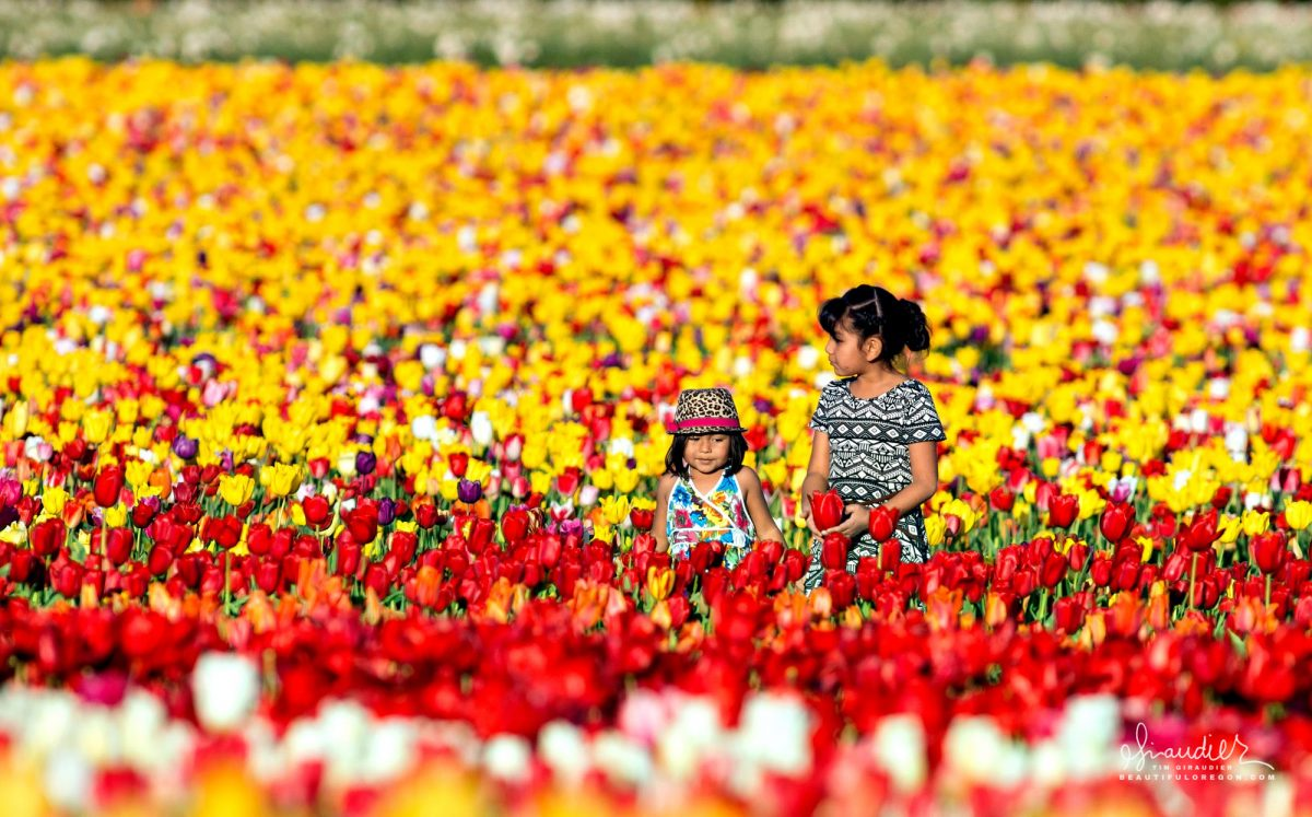 Two girls lost amidst Willamette Valley tulip fields at the annual Wooden Shoe Tulip Festival near the town of Mount Angle in Marion County.
