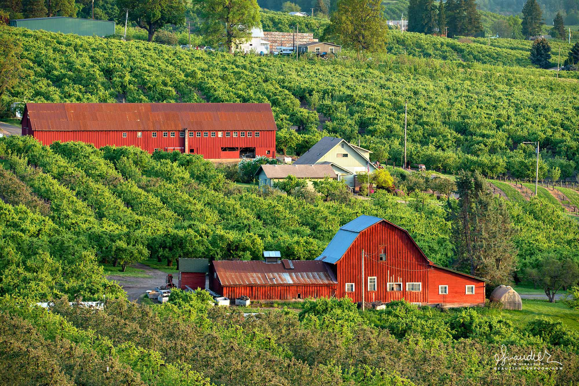 Hood River apple orchards. Agriculture of Hood River County and Oregon.
