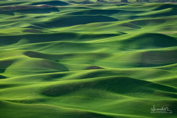 Winter wheat of the Palouse Hills. Whitman County, Eastern Washington agriculture.