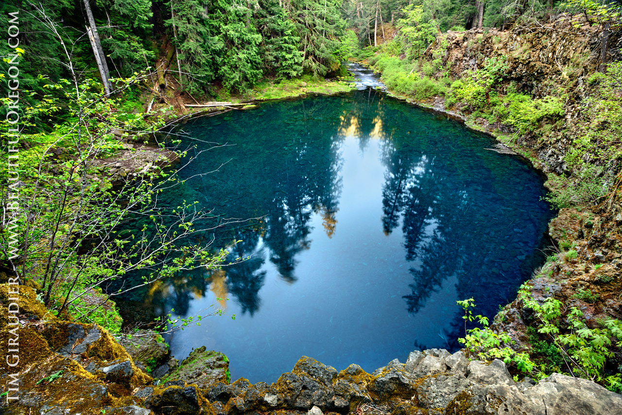 tamolitch blue pool. Perfect Blue Tamolitch Blue Pool McKenzie River Willamette National Forest Lane  County Oregon With Tamolitch Pool