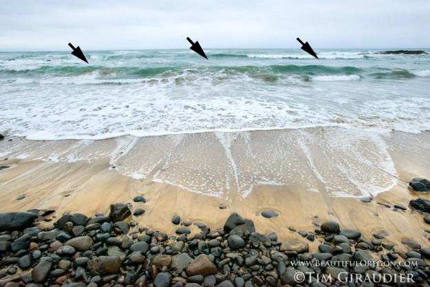 surf-perch-fish-oregon-coast-2115-5936