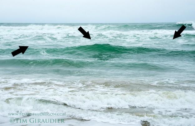 Surf perch fishing on the oregon coast beautiful oregon for Deep sea fishing oregon coast
