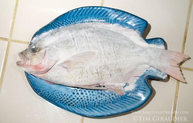 surf-perch-recipe-2315-5958