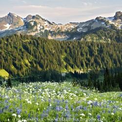 tatoosh-range-mount-rainier-national-park-washington-cascades-73013-5813